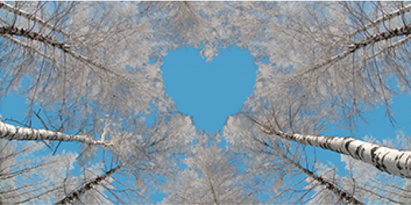 FOREST LOVE SKYPANELS